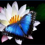 Mariposas, colores de la primavera