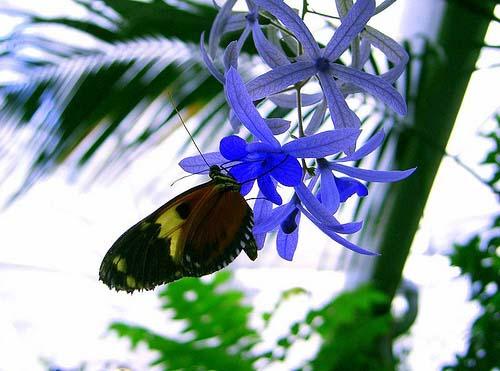 Mariposa en flor azul