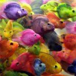 Fotos de animales: vida bajo el mar