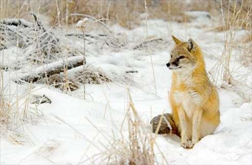 Reserva de vida salvaje en Canadá