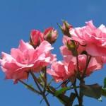 Flores en primavera, alegría que despierta