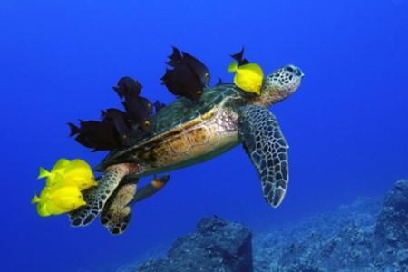 Fotos National Geographic de Animales