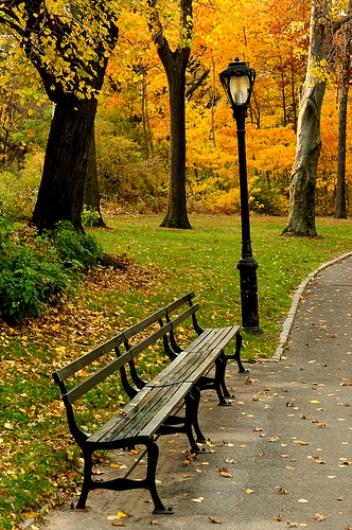 Un banco en Central Park