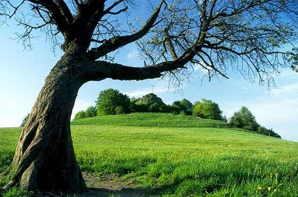 Verdes campos