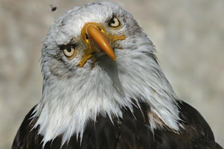 Fotos de Aguilas, aves señoriales