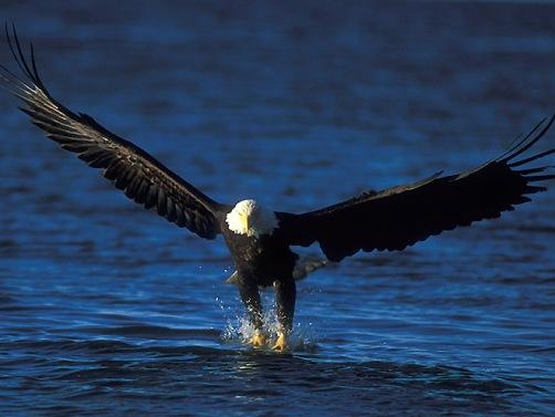Fotos de Aguilas