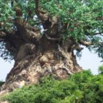 The Tree of Life, el árbol de la vida de Disney