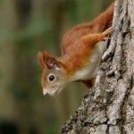 Fotos de animales que miran más allá