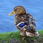 Fotos de aves, mirando a la vida