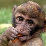 Observando fotos de animales diversos