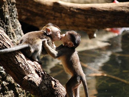 Besos en animales