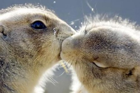 Fotos de animales que se besan
