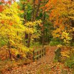 Fotos de bosques en Otoño