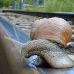 Fotos de caracoles, buscando una ilusión