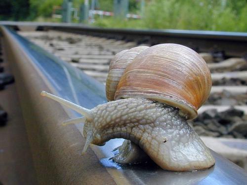 Fotos de caracoles