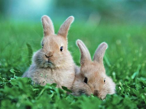 conejos en la hierba