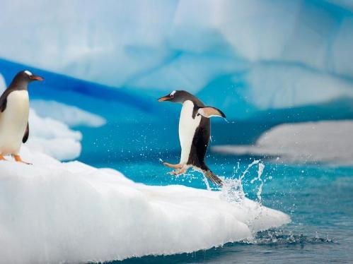 felicidad pinguina