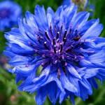 Fotos de Flores, dando alegría