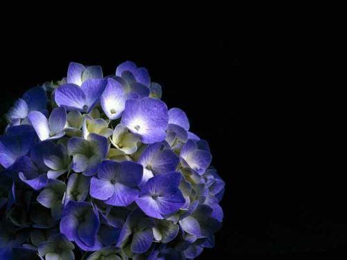 http://sobrefotos.com/wp-content/uploads/flores-azules.jpg