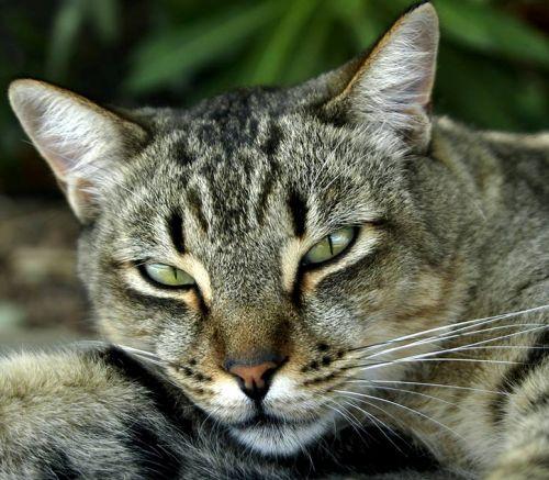 Foto de gato