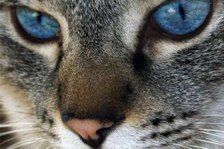 Gatos, ojos, miradas, colores… en fotos
