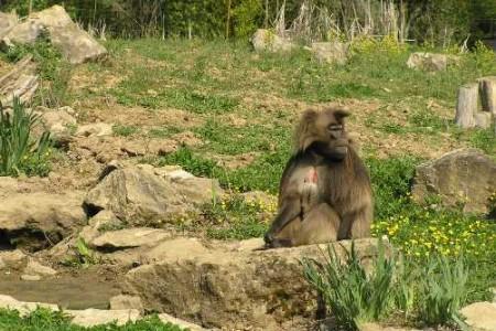 Con la familia en el Valle de los Monos