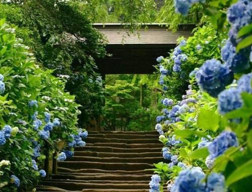 Japon florido