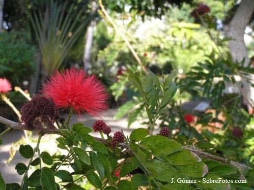 jardin-botanico-04