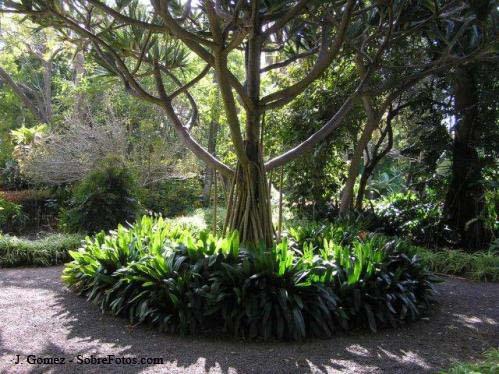 jardin-botanico-06