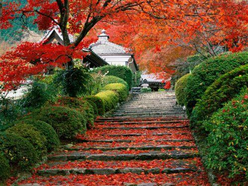 Jardin en Japon