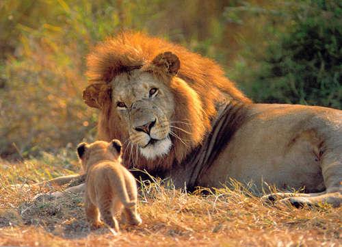 leon y cria