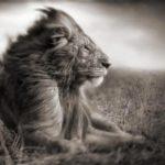 Nick Brandt, fotos del Africa más salvaje