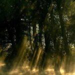 Fotos de momentos entre luces y sombras