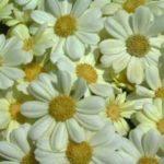 Campos de flores, fotos de colores