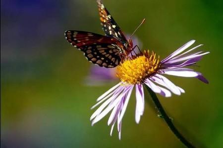 Mariposas, imágenes de etérea felicidad