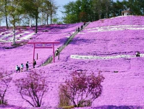 Flores en Japon