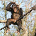 Fotos de primates, reflexionemos sobre la vida