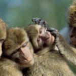 Dia Mundial de los Animales, tienen sus derechos