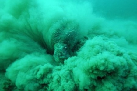 Fotos National Geographic: Beast of the sediment