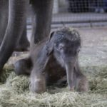Fotos de un elefante bebé en cautividad