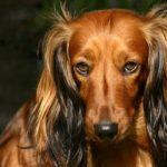 Fotos de perros, animales con alma