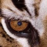 Tecnicas de fotografia: primeros planos de animales