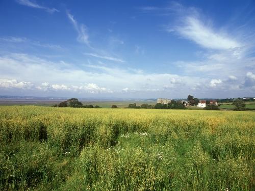 Campos en Gales